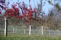 #obst #erlebnisgarten #lohnsburg #innviertel #tipps #mosauerin #landleben #landblog www.mosauerin.at Ranch, Country Living, Tourism, Fruit, Tips, Lawn And Garden, Guest Ranch