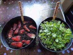 Germinar sementes de morango usando a fruta. O Melhor Fertilizante Natural Para as Plantas!!! - YouTube