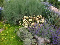 June 14, 2009 via http://prairiebreak.blogspot.com/2015/03/kendrick-lake.html (broom? or ephedra? 2 cacti, yellow ice plant, yucca, flax, purple thing - maybe nepeta?)