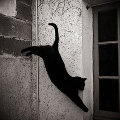 480 Best Black Cats Cross Your Path Images In 2019 Cats border=