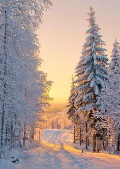 A beautiful winter landscape with lots of snow. Winter Pictures, Nature Pictures, Winter Photography, Nature Photography, Winter Drawings, Winter Scenery, Winter Sunset, Alaska Winter, Winter Love