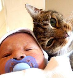 Babies Cats = Cuteness Overload