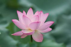 The night of the lotus by Wu Zhou on 500px