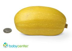 22 weeks: Your baby has stretched to the size of a spaghetti squash and weighs almost a pound. (Length: nearly 11 inches.)  @babycenter #pregnancy #howbigisyourbaby