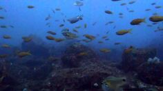 20m付近は水もキレイ 伊豆のダイビングはケイズリパブリック