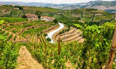 Portugal's Douro Valley is one of the 9 Trip Ideas for Food-Loving Dads according to thedailymeal editor Nikkitha Bakshani - June 8, 2015   Skip the necktie and gift Dad with a vacation his palate will love  Your oenophile dad has probably already visited Napa Valley, so why not take him across the pond to the rolling hills of northern Portugal? While port, which we recommend tasting at House of Croft, tends to steal the spotlight when we think of the region's wine, the Douro Valley