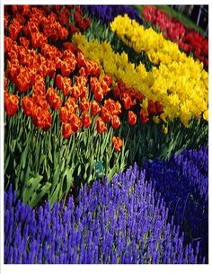 Spring time=Flowers! Visit Martin's Pet & Garden in store or online for all your favorite blooms!