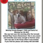 Missing female white and tan beagle mix. Please contact with any information 405-412-5219. Please see attached flyer for contact info FB Page: Moore Oklahoma Tornado Lost and Found Animals