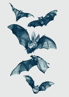 Bats - Soft Gallery by Philipp Zurmoehle, via Flickr