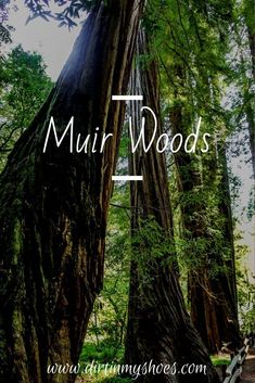 Muir Woods National Monument is one of the most beautiful places in California. Just an hour from San Francisco this amazing forest is full of some of the tallest trees in the world! If you are looking for things to do with kids out in nature, then there is nothing better than wandering the trails at Muir Woods! Make sure this is on your bucket lists if you are on vacation, a road trip, or are just out for the day with the family! Beautiful Places In California, Muir Woods National Monument, Greatest Adventure, Bucket Lists, Monuments, Daydream, Trip Planning, Vacations, Things To Do
