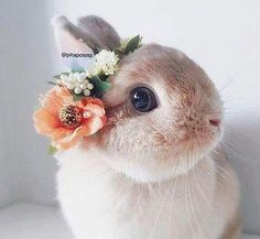 animal, beautiful, and bunny image - Kaninchen Baby Animals Super Cute, Cute Baby Bunnies, Cute Little Animals, Cute Funny Animals, Cute Cats, Lop Bunnies, Bunny Bunny, Easter Bunny, Cute Bunny Pictures