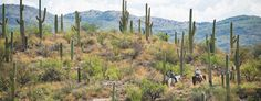 az-expedition-tanque-verde-guest-ranch-horse-cactus.jpg (1024×400)
