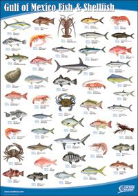 Gulf of Mexico Fish and Shellfish