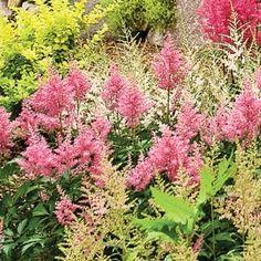 12 vivaces sans entretien qui fleurissent tout l'été! - Galeries d'extérieurs - Jardinage et extérieur - Pratico Pratique