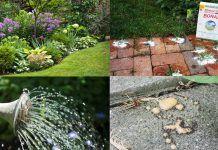 Unbelievable Borax Uses In The Garden