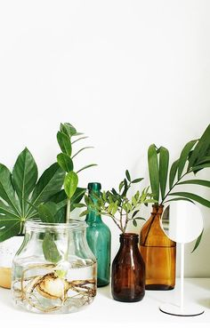 Glazen vazen en flessen