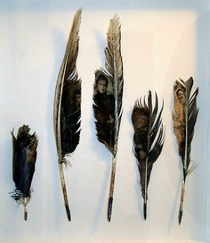 Feathers by Louise Richardson    mixed media, feathers, lead