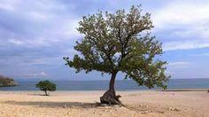 Σαμοθρακη Beach, Water, Outdoor, Woods, Water Water, Outdoors, Seaside, Outdoor Games, The Great Outdoors
