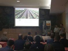 Bayer asegura la producción de verano con nuevas variedades de lechuga resistentes al Fusarium