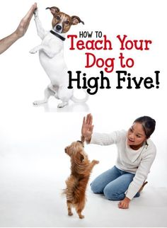 (35) Training your dog to do new tricks is so much fun! It's a great way to keep your dog mentally stimulated and bond with your pup at the same time. T… | Pinterest