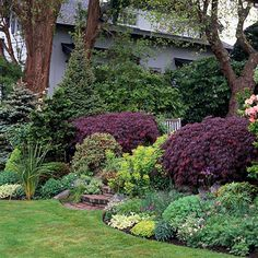 Golden, purple, violet, maroon, or plum-hue leaves. The rich coloring stands out in the garden and blends well with a wide variety of shades, including chartreuse.