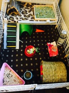 diy c & c cage for my guinea pigs skittles and lucky