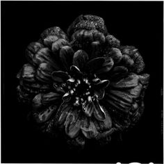 Back to Black by Bettina Güber