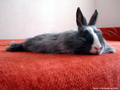 Are you listening to your bunny? Read our latest article on #Rabbit communication on www.bunny-stories.com