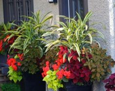 traditional exterior by Pot Incorporated