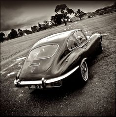 Jaguar ...study in black and white