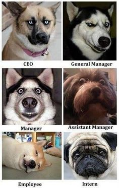 Faces of management. I would say they remind me of people I've worked for, but I don't want to insult the dogs.