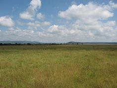Farm For Sale in Mkushi Farming Block Farming, Perennials, Exterior, Water, Plants, Travel, Gripe Water, Viajes, Perennial