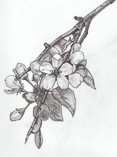 Drawing of apple blossom, tattoo inspiration Apple Blossom Tattoos, Apple Blossom Flower, Apple Tattoo, Apple Flowers, Orange Blossom, Jasmine Drawing, Jasmine Flower Tattoos, Tattoo Fleur, Florida Tattoos