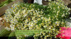 Mercato di Porta palazzo Torino (mercato all'aperto più grande d'Europa), la camomilla come non siamo abituati a vederla, in mazzi e direttamente dai campi.  #ruraland #comunicareilrurale #ruralandwed #ruraland4 #tradizioni #acqua #biodiversità #clima #energia #paesaggio #bellezza #sprecozero #risorsenaturali #ambiente #greeneconomy #camomilla  Ancora 85 giorni e anche tu potrai partecipare al ruralandWED.