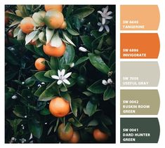#Paint colors from #ColorSnap by Sherwin-Williams #sherwinwilliams orange oranges fiery fierce strong heavy thick deep chic sophisticated branding brand identity graphic design muted greens tangerines hunter olive misty grey burnt orange Florida orange blossoms interior color scheme fashion haute couture fall fashion trend report invigorate refresh earthy unique elevated restaurant palette marketing citrus inspired living dining room den library office basement game man cave #chipit