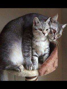 Protective Mama