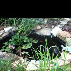 Backyard pond.
