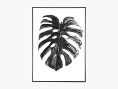 Plants - Monstera Deliciosa - Sort/Hvid