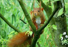 Eichhörnchen im Maigrün - Jahreszeiten - Galerie - Community