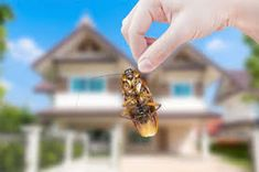 Applying Pest Control Methods in Jaipur and us. You can get pest treatment at an affordable price Termite Control, Pest Control Services, Jaipur, How To Remove, News Agency, Garden Pests, Green, Tips