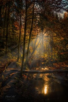 Autumn Jungle by Stefan Bossow on 500px