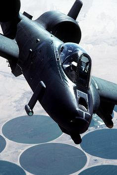 pinterest.com/fra411 #Warthog
