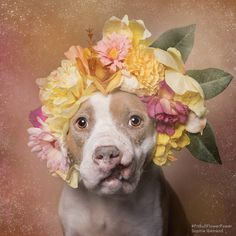 Amy, Animal Haven NY - sophie gamand