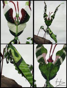 Devil's Flower Mantis X4 by BlackHoleInAJar