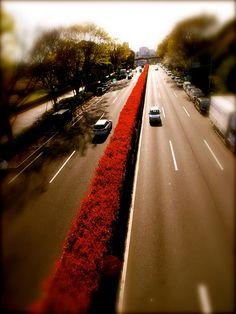 red flowers belt