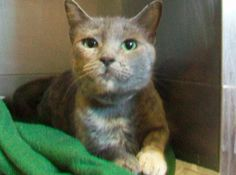 Cupcake is so cute.  She needs someone to fall in love with her and adopt her.  She is in Orange County, CA.  A1157095, spayed fe 2 yo, Tortie.  Call to adopt 714-935-6848