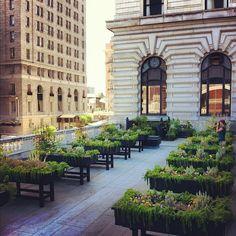 The Fairmont San Francisco's secret rooftop garden. Recently featured on Gardenista! http://gardenista.com/posts/a-chefs-secret-roof-garden-the-fairmont-hotel#