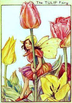 Tulip Fairy Cicely Mary Barker