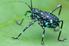 Image result for photos of katydids