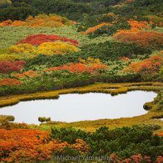 Photograph by Michael Yamashita @yamashitaphoto - Fall foliage on Toma Nokkoshi: The season is now at it's peak in the highest mountains of #Daisetsuzan National Park. #Hokkaido #Japan #autumn @natgeo @natgeocreative @natgeotravel